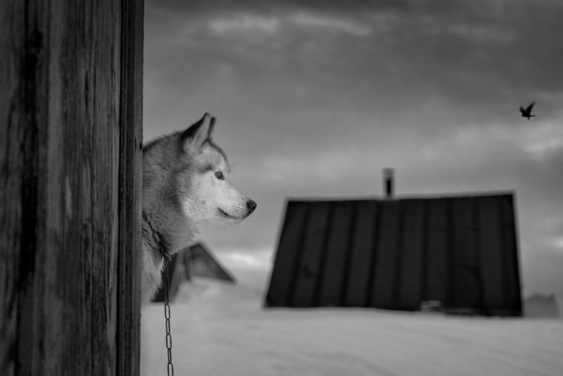 Фотограф Рагнар Аксельссон - №6