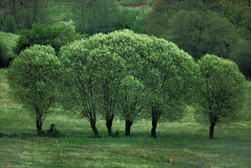 Портреты деревьев - №4