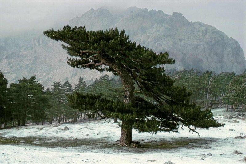 Портреты деревьев - №7