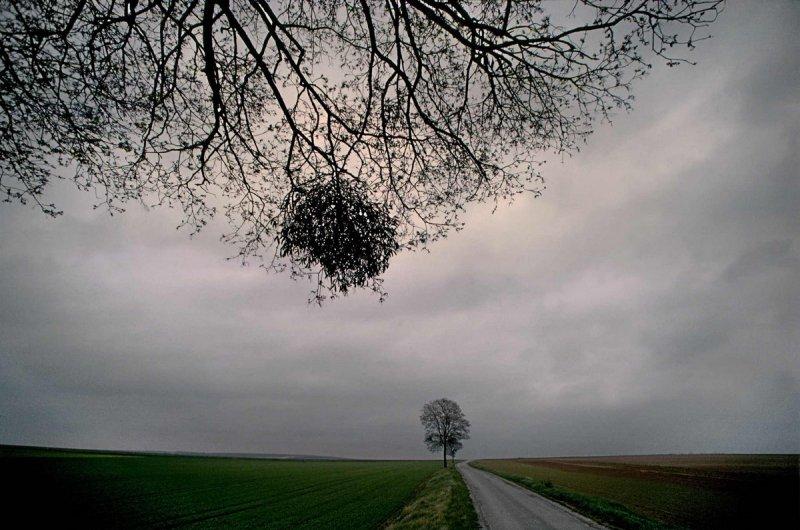 Портреты деревьев - №11