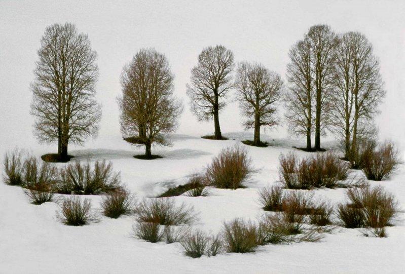 Портреты деревьев - №2