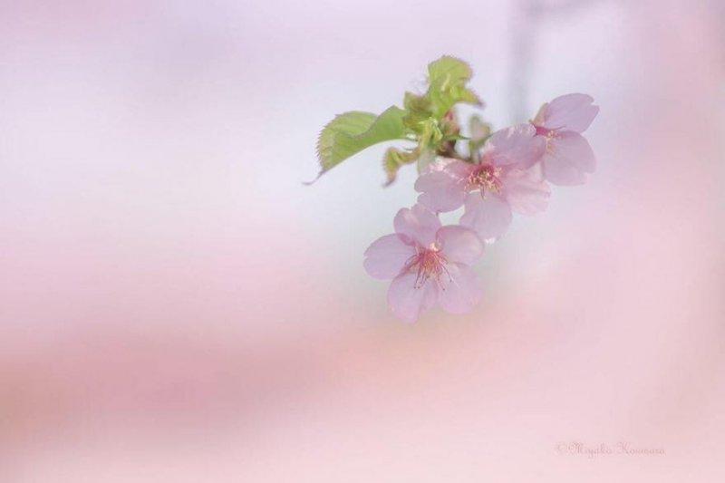 Фотограф Miyako Koumura - №12