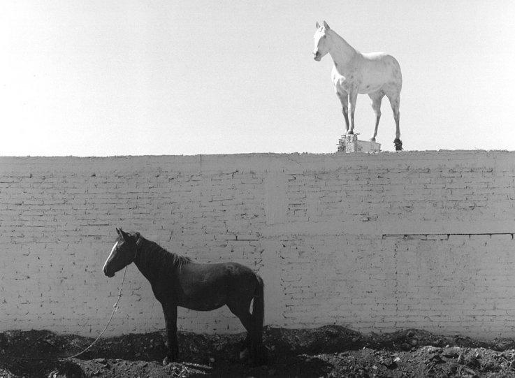Мир чёрно-белой фотографии - №13