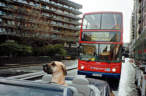 Уличная фотография от Matt Stuart - №8