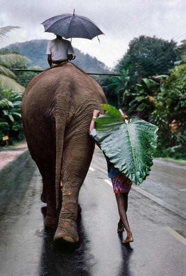 Молодой человек со слоном, Шри-Ланка, 1995