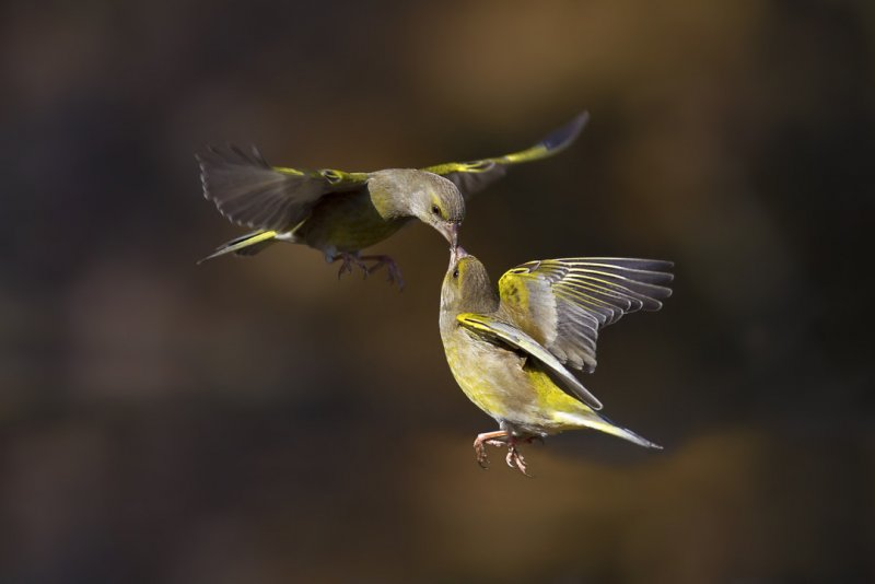 1/2000 с. Для быстрого движения. Например, если хотите снять полёт птицы.