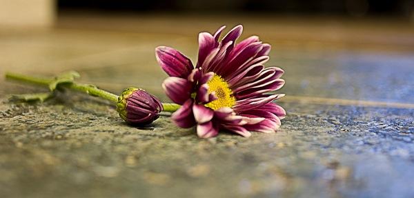 Как делать фотографии цветов? - №2