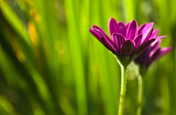 Как делать фотографии цветов? - №3