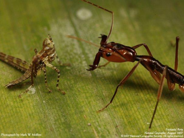 Мир насекомых