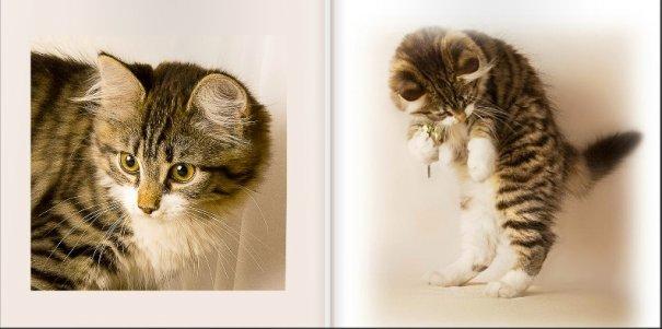 Кошачий натюрморт
