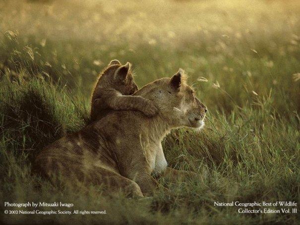 Все краски животного мира