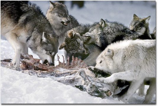фото охота
