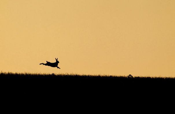 © Kevin Sawford/National Geographic Photo Contest