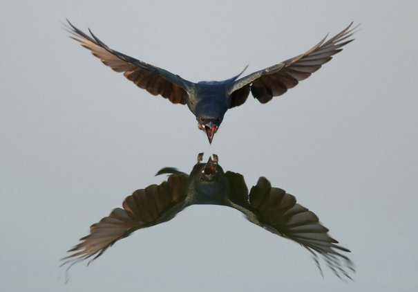 © Vinayak Parmar/National Geographic Photo Contest