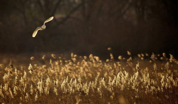 © Mark Bridger/National Geographic Photo Contest