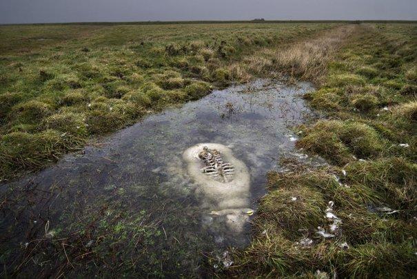 © Johannes Bojesen/National Geographic Photo Contest