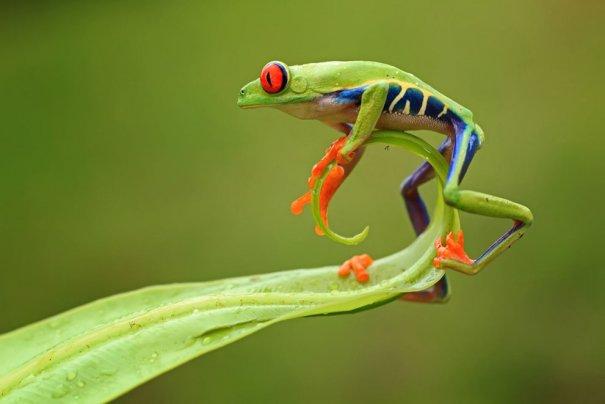 © Shikhei Goh/National Geographic Photo Contest