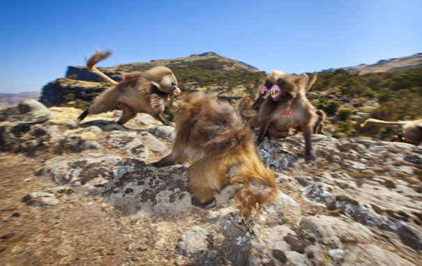 © Thomas Alexander/National Geographic Photo Contest