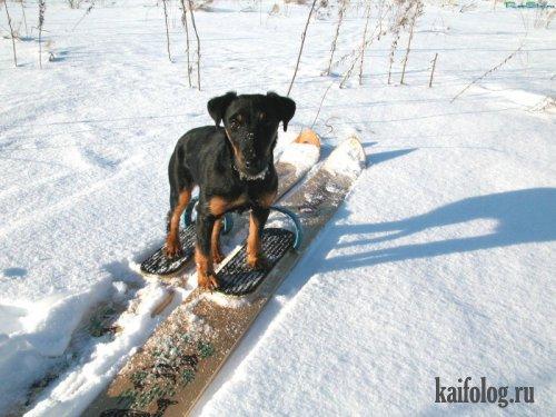 зимний фото юмор