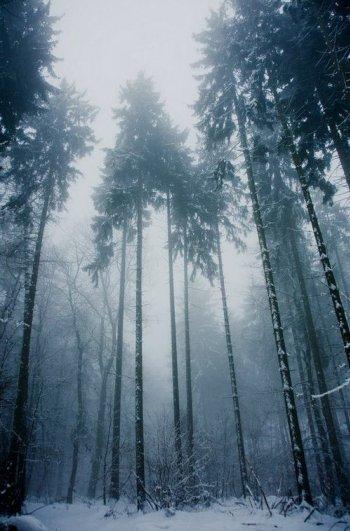 Как фотографировать в холод - №7
