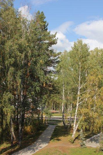 Ранняя осень сибирской аллеи