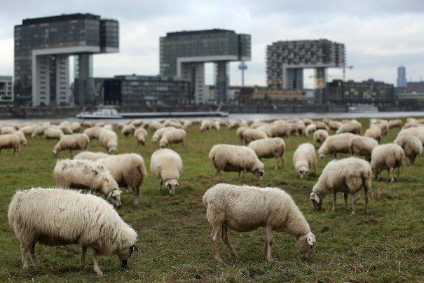 Oliver Berg/European Pressphoto Agency