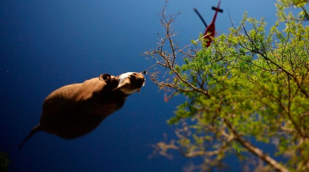 AP Photo/Green Renaissance-World Wildlife Fund