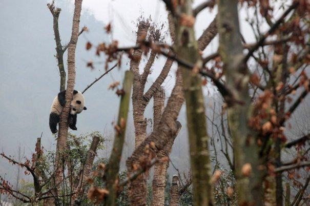 China Daily/Reuters