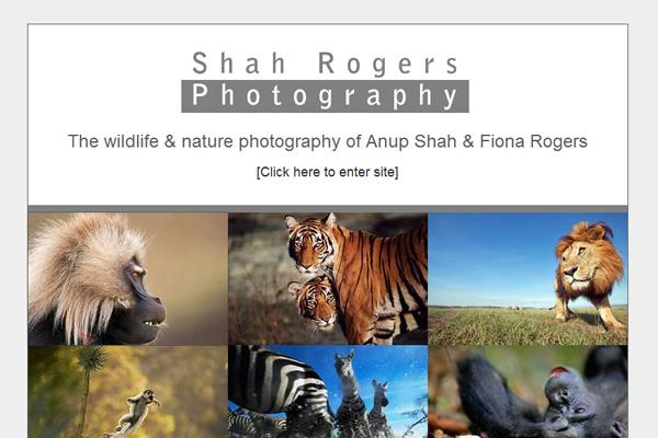 Сайты-портфолио фотографов дикой природы - №11