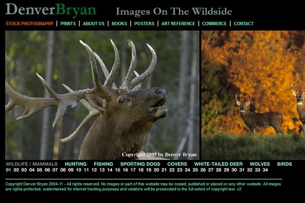 Сайты-портфолио фотографов дикой природы - №12