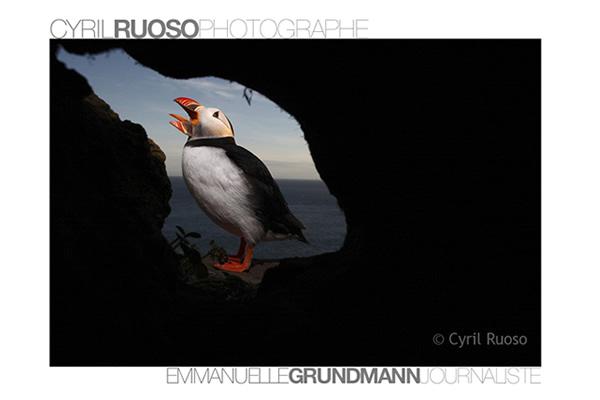 Сайты-портфолио фотографов дикой природы - №14