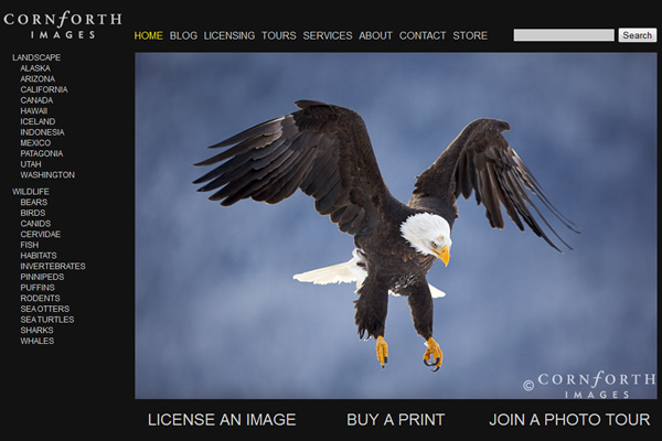Сайты-портфолио фотографов дикой природы - №17
