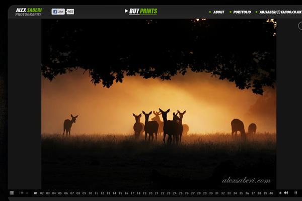 Сайты-портфолио фотографов дикой природы - №18