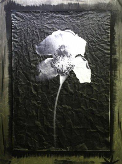 художественные выставки фото