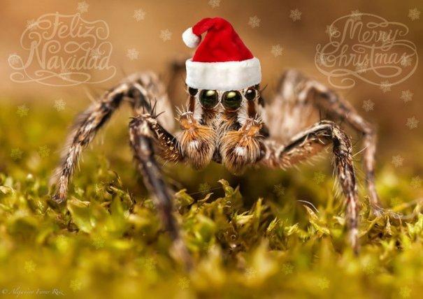 Рождественские открытки 2012 - №17