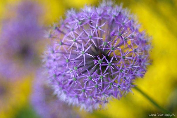 красивый цветок фото