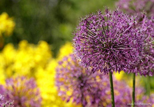 фото красивых цветов