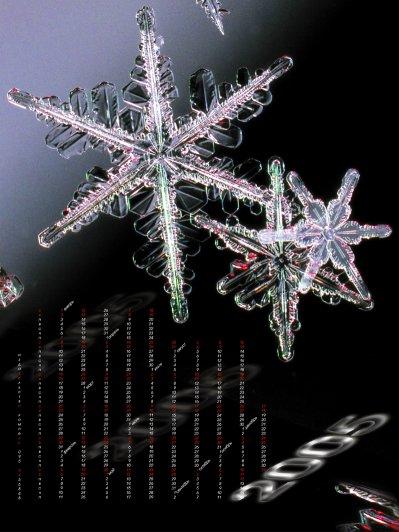 Shnee_1