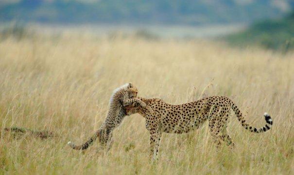 © Sanjeev Bhor/National Geographic Photo Contest