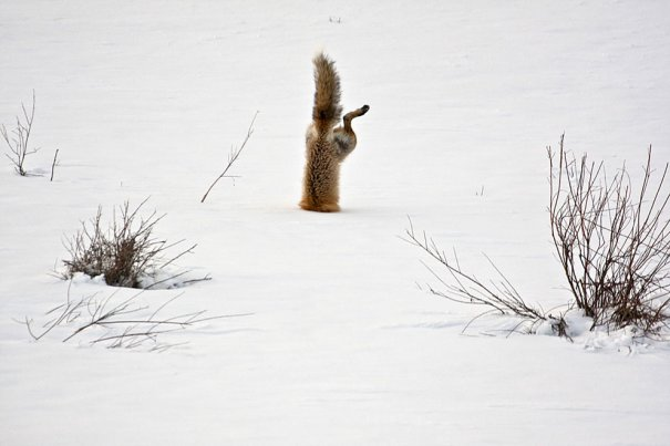© Micheal Eastman/National Geographic Photo Contest