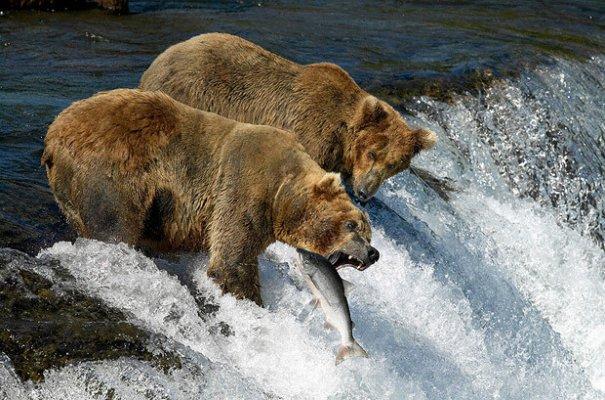 дикие животные фото