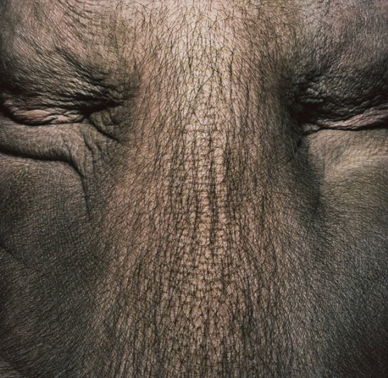 мир ярких животных