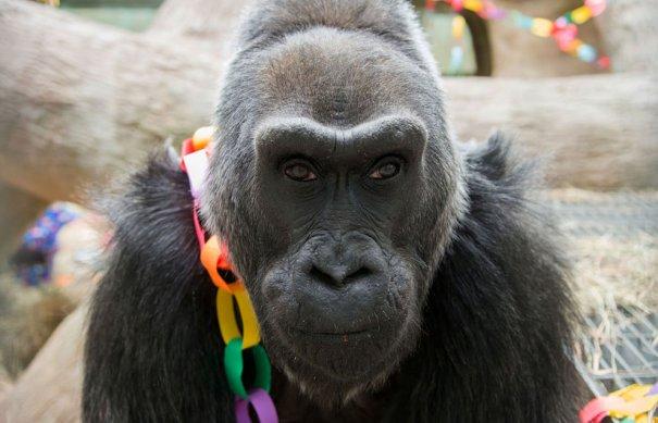 AP Photo/Columbus Zoo and Aquarium, Grahm S. Jones