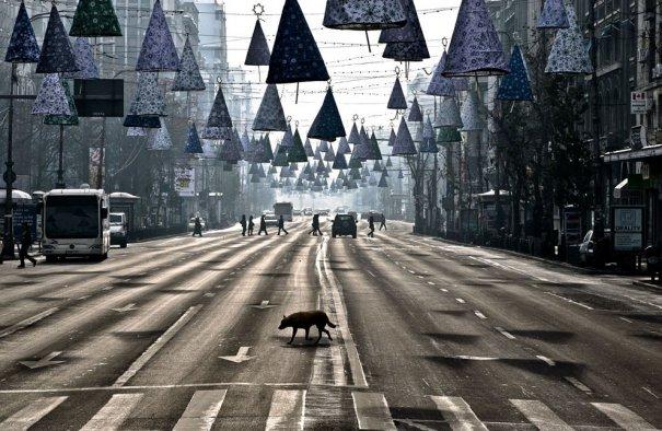 AP Photo/Vadim Ghirda