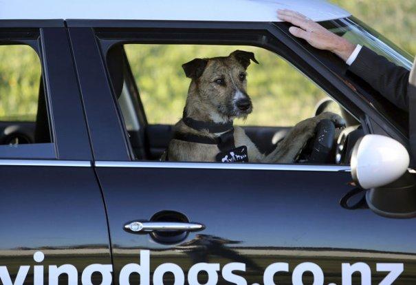 Reuters/SPCA/Michael Bradley