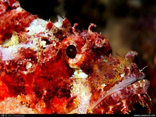Подводная фотография