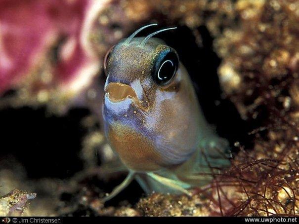 фотографии подводного мира