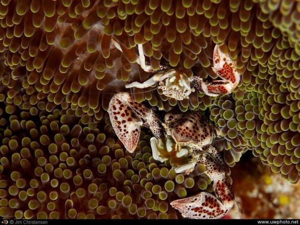 подводный мир фотографии