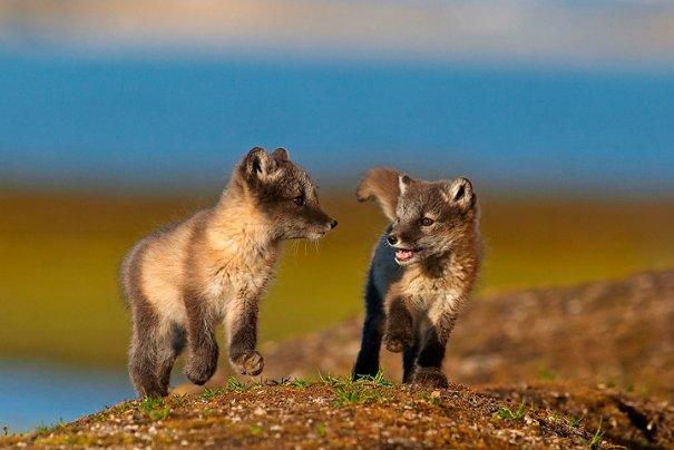 экзотические животные фото