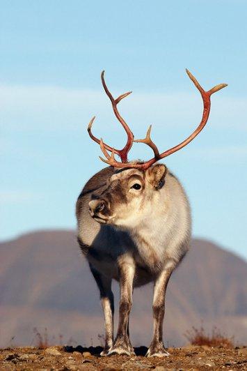 самые экзотические животные